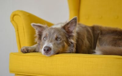 Why Upholstery Cleaning is Important [3 Reasons]